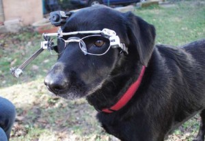 blog-dog-gaze